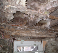 Dry Rot in Context